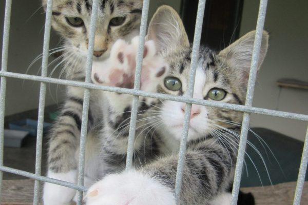 kitten_cattery2